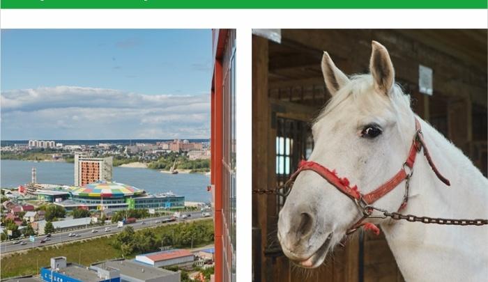Активное воскресенье: запишись на тройную экскурсию: «Ясный берег», конный клуб и аквапарк