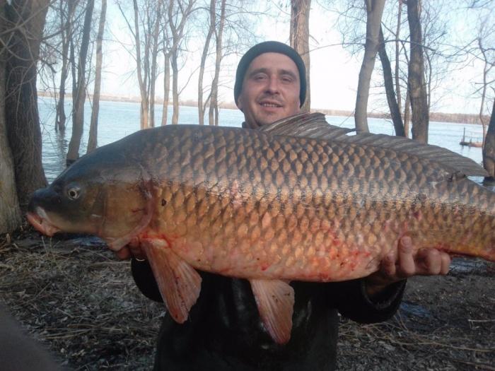 Дмитрий Андропов поймал сазана весом 16 кг на ОбьГЭСе