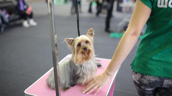 Более 400 собак примут участие в красноярской выставке «Зоомир»