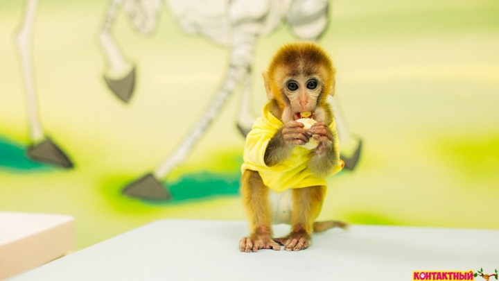 Сеть контактных зоопарков «Трогай! Гладь! Корми!» теперь в Новосибирске