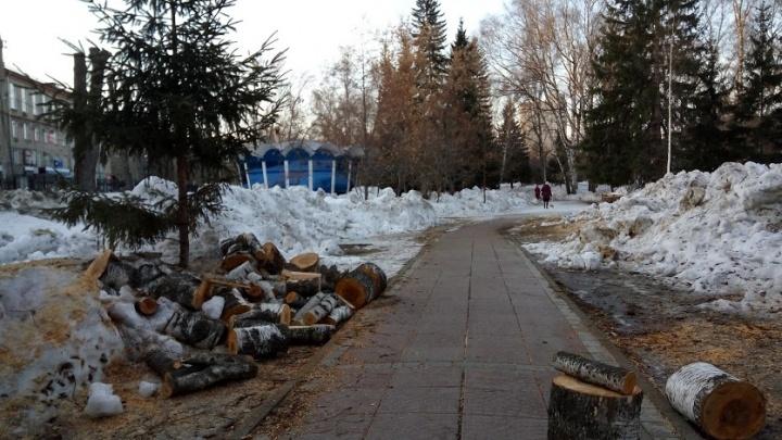 В Нарымском сквере начали рубить деревья