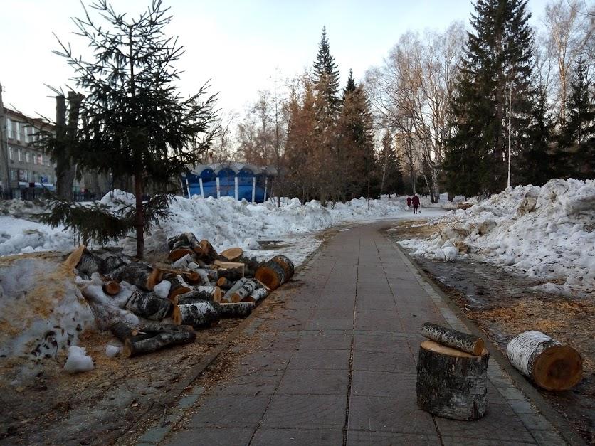 Сквер лишится около 30 старых деревьев