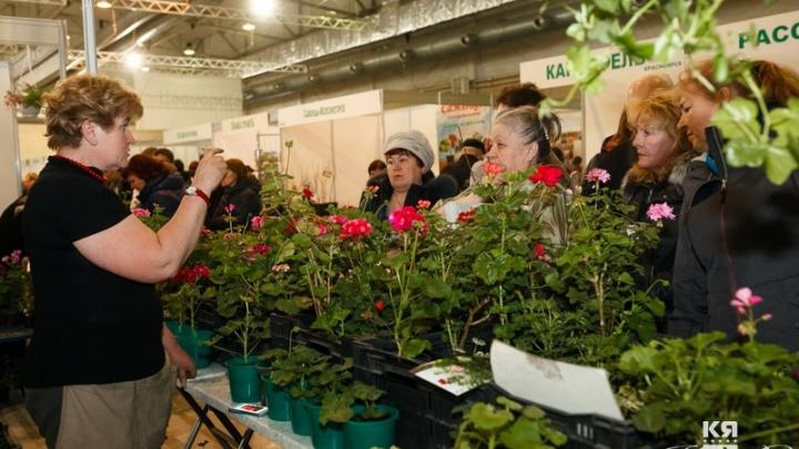 Уникальные геотеплицы, новинки садовой моды и мастер-классы по садоводству: в Красноярске готовятся к масштабной дачной ярмарке