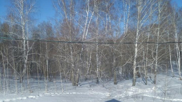 Чиновники обеспокоились судьбой березового леса в Ложке после жалоб жителей