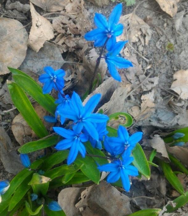 Красивые цветы радуют жителей Затулинки