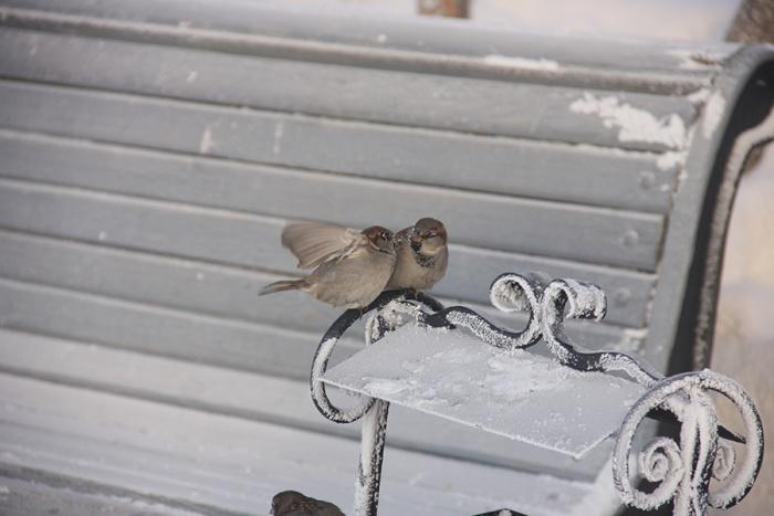 Выходные в Новосибирске будут морозными
