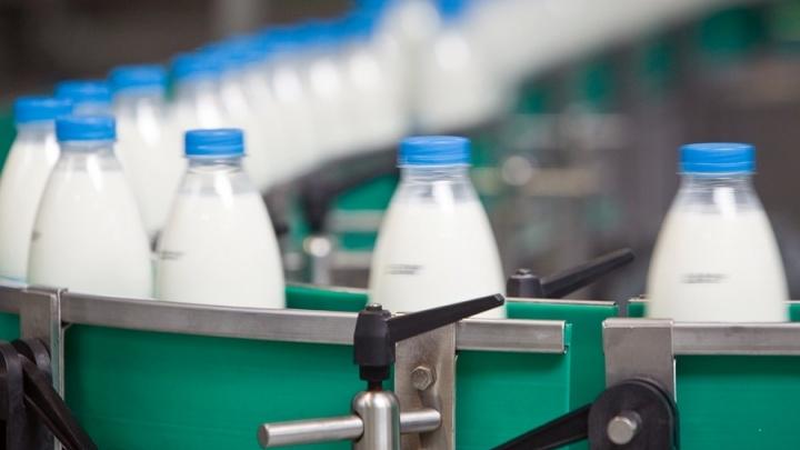 Проверка молока: отведайте с кишечной палочкой