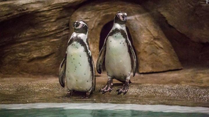Зоопарк позвал на показательное кормление пингвинов (обновлено)
