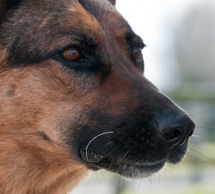 Собаки должны быть добронравными и отважными