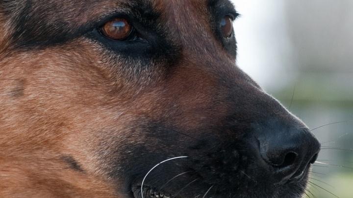 ФСБ ищет трех бесстрашных псов