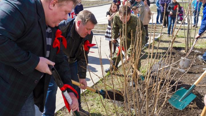 В Кировском районе жители высадили сосны и нашли клад
