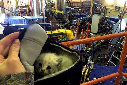 Этот котенок — не из пугливых, несмотря на растерянный вид. Кошечка родилась осенью около Института ядерной физики СО РАН в новосибирском Академгородке и получила имя Мюона в честь неустойчивой элементарной частицы
