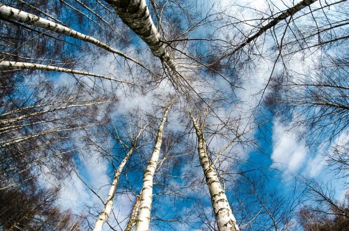 Потепление придет в Новосибирск 14 и 18 марта