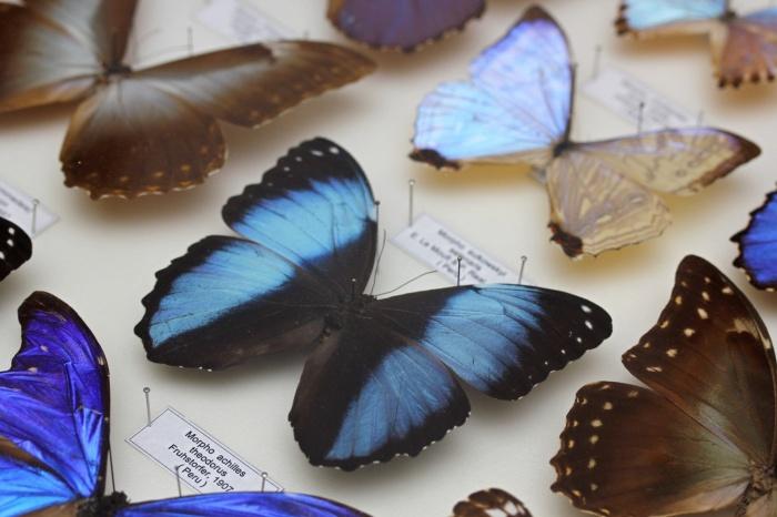 В музее природы покажут красивых бабочек и самых больших жуков планеты