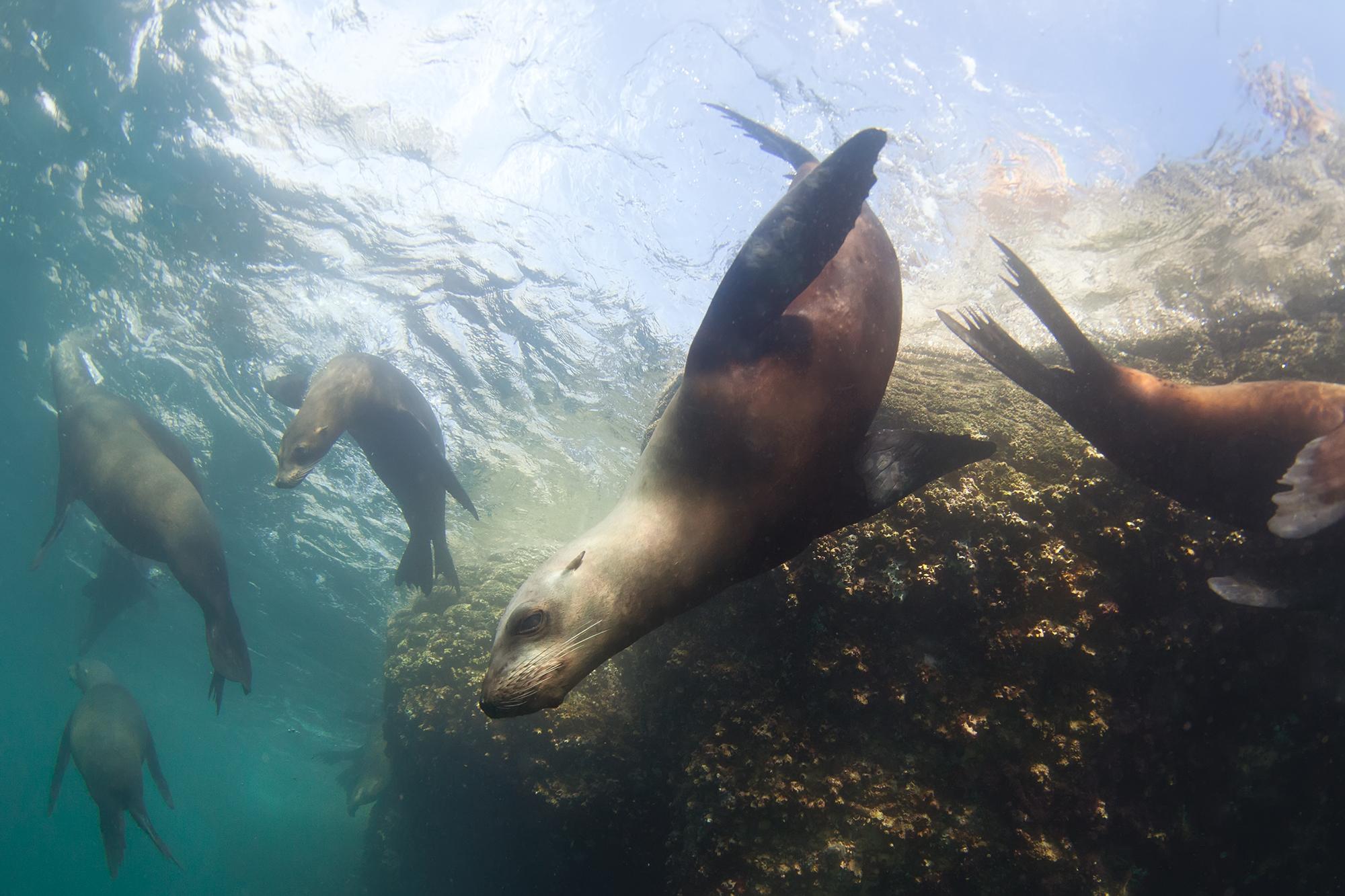 Под воду фотограф опускается в маске и ластах