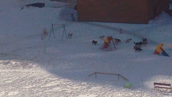 Стая агрессивных собак разогнала детей и оккупировала детскую площадку (видео)