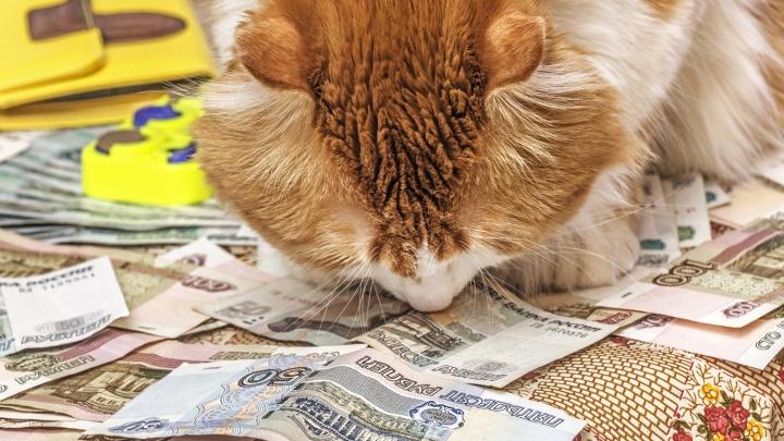 Средняя зарплата бюджетников в НСО перевалила за 30 тысяч