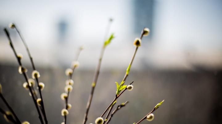 Синоптики рассказали, когда в Новосибирске зазеленеют листья