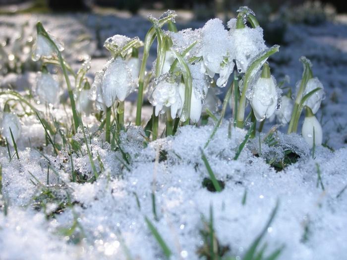 В регионе продолжает сохраняться теплая весенняя погода