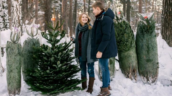 Датские елки развозят по городу бесплатно