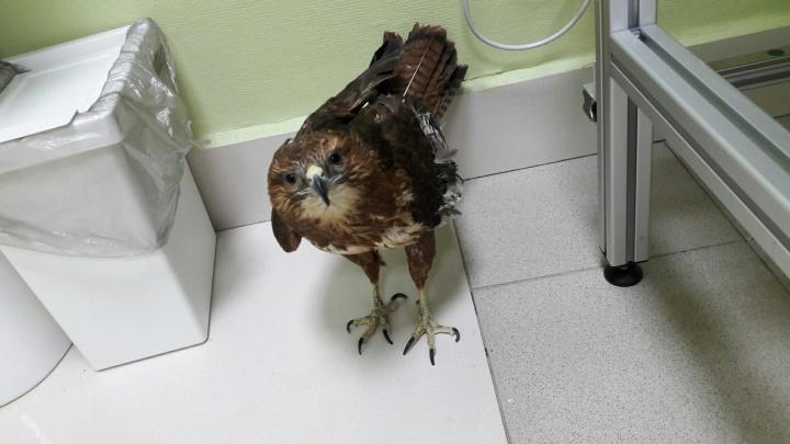 У спасенных из томского зоопарка хищников нашли серьезные травмы