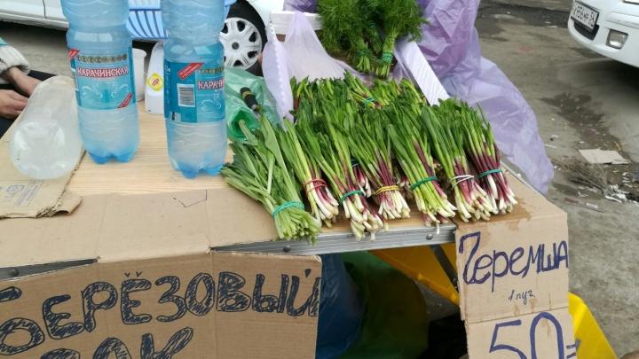 В Новосибирске начали торговать березовым соком и таежной зеленью