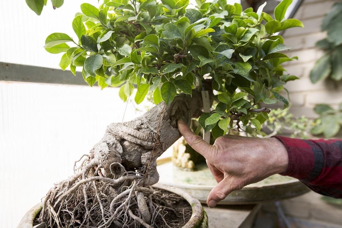 Искусство выращивания деревьевЖенские радости