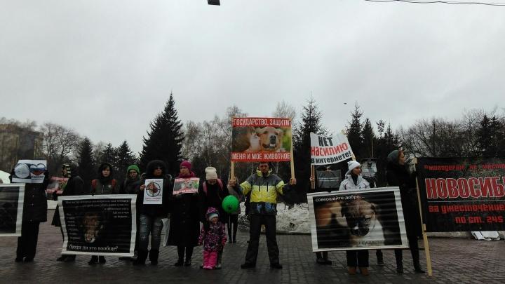 Защитники животных-жертв развернули пугающие плакаты в центре города