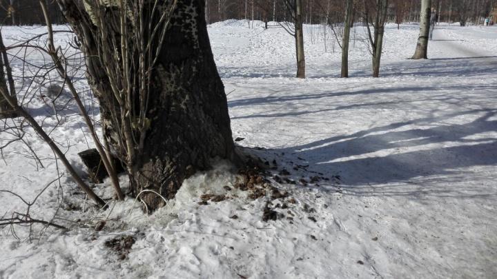 Жители пожаловались на загаженный собаками сквер Сибиряков-Гвардейцев