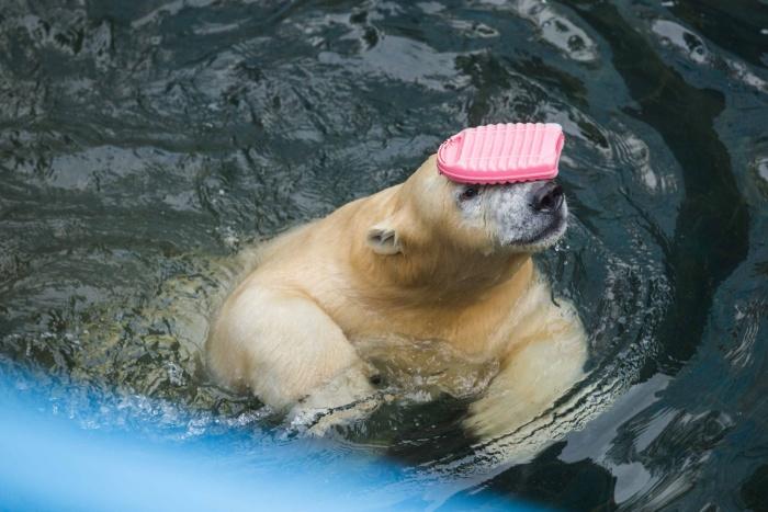 За год Ростик вырос в большого медведя