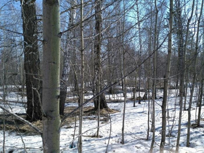 Деревья в Ложке, которые разрешили вырубить