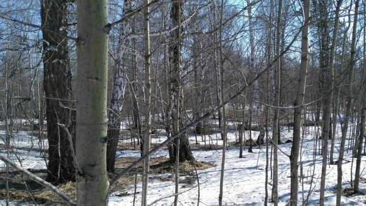 Жители поселка под Новосибирском остановили дровосеков звонком в полицию