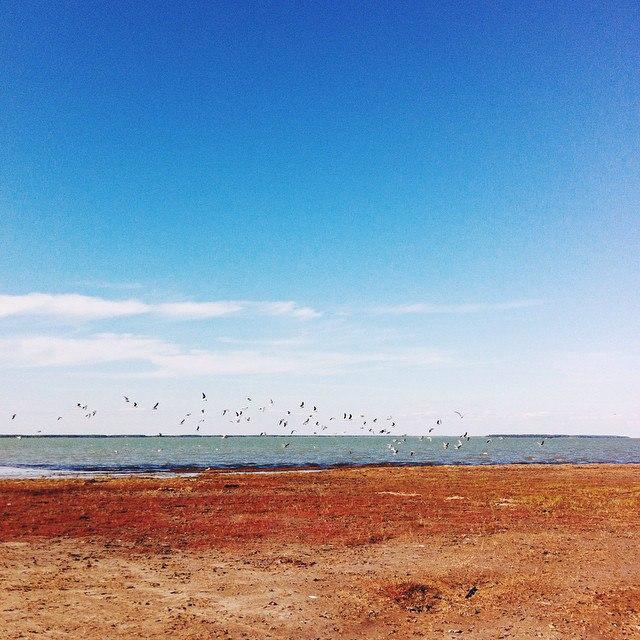 Озеро Чаны. Фото Натальи Пугаевой