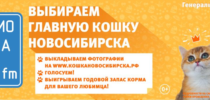 «Радио Дача 106,7 FM» выбирает главную кошку Новосибирска-2017