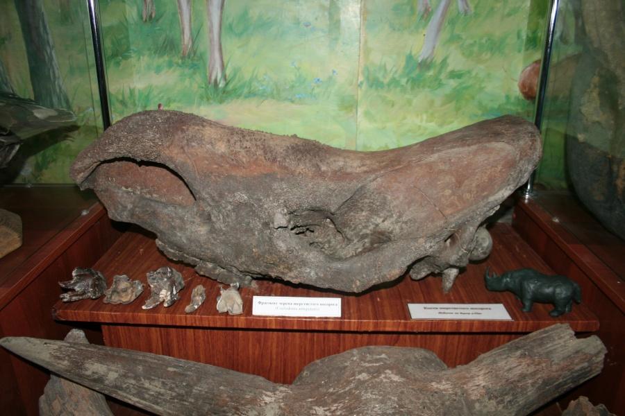 Череп старинного носорога сибирские рыболовы пытались реализовать через Интернет