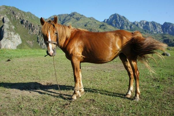Распродажа конных туров