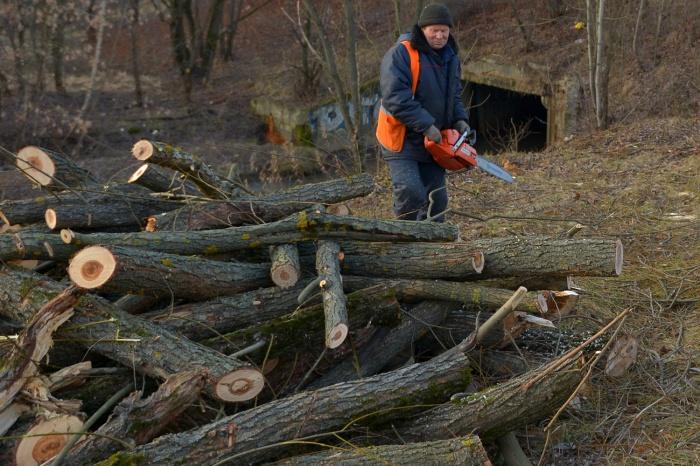 Под снос попадут больше тысячи деревьев, которые растут рядом с теплотрассами