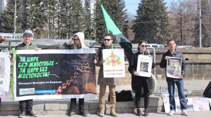 Дюжина новосибирцев вышла протестовать против цирка в Первомайский сквер