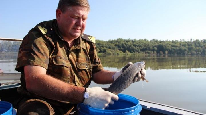 После гибели тысяч карасей омичам предложили ловить рыбу на продажу