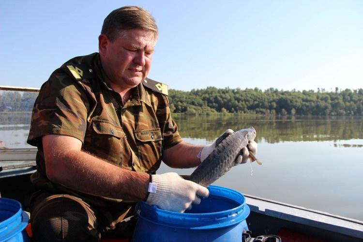 Стала известна причина массовой смерти рыбы вОмской области