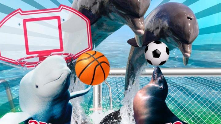 Передвижной дельфинарий в Омске: расписание представлений