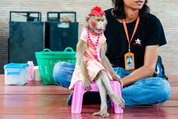 Фотографий обезьяны у дрессировщика нет, и особых примет Марфуши он тоже не назвал; владелец переживает, что животное замерзнет в тонком костюме (фото из архива)