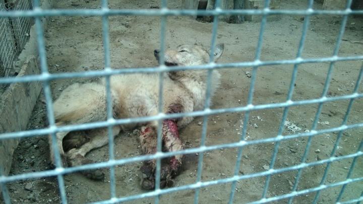 После жалобы омича прокуратура начала проверку Большереченского зоопарка
