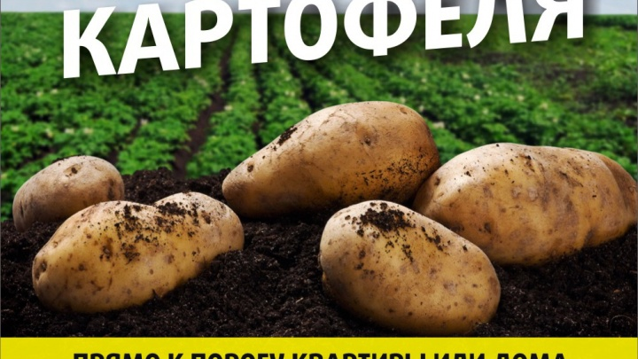 Акция: картофель по 11 рублей с доставкой!