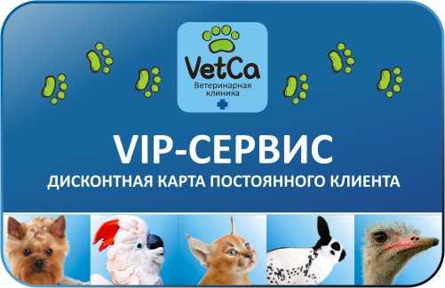 Гостиница для животных в сети ветеринарных клиник VetСa - помощь в нужное время