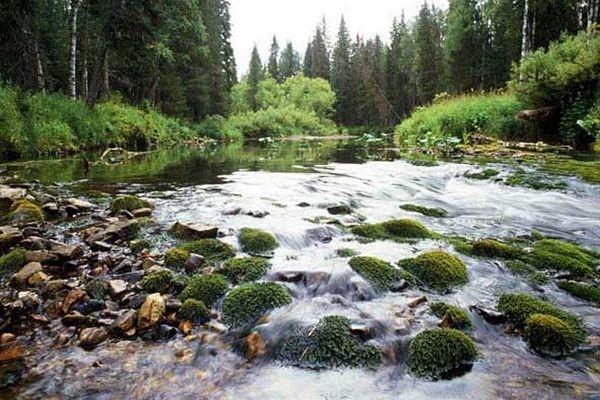 Представитель филиала «Азот» выбран делегатом IV Всероссийского съезда  по охране окружающей среды