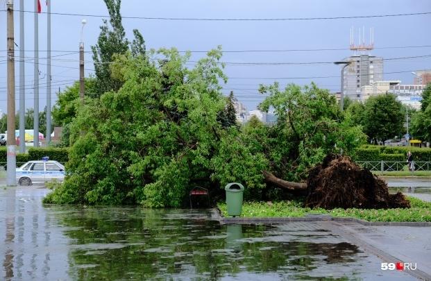 МЧС: в Прикамье ожидается усиление ветра и грозы