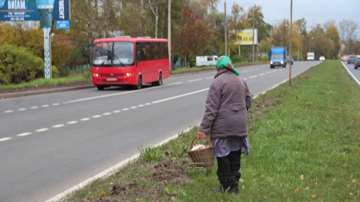Нарушают от безысходности и лени: ярославцы остались без пешеходных переходов на проспекте Авиаторов