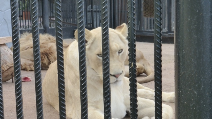 В красноярском зоопарке поднимают цену за вход