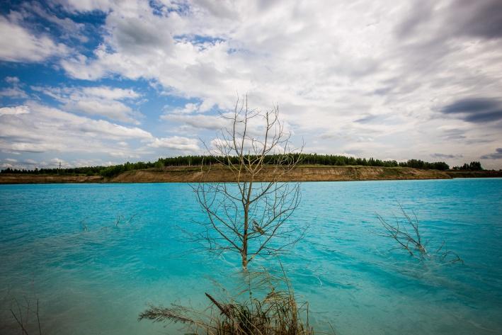 Вдоль берега растёт много цветов, но стоит воде прикоснуться к травинке, как та сразу вянет